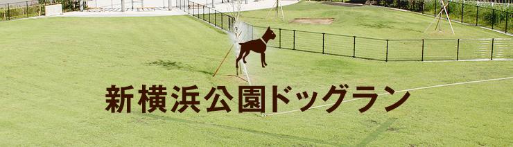 新横浜公園ドッグラン